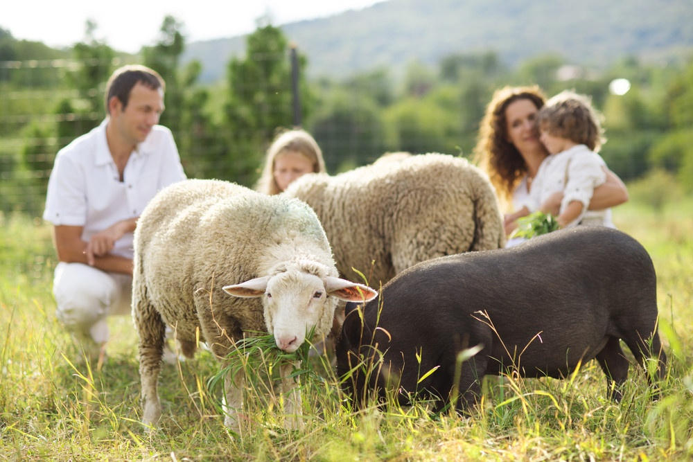 8 Benefits of Plastic Farm Feeders